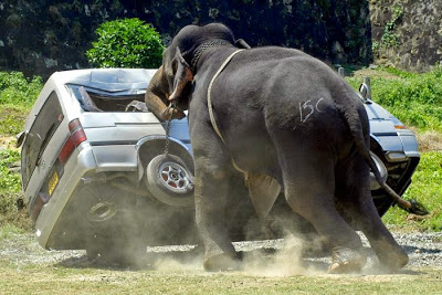 accident voiture elephant